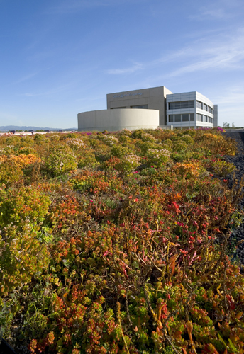 Green Roof at Ford HQ Irvine