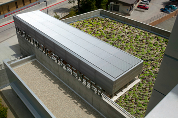 Green Leadership Award Winning Green Roof