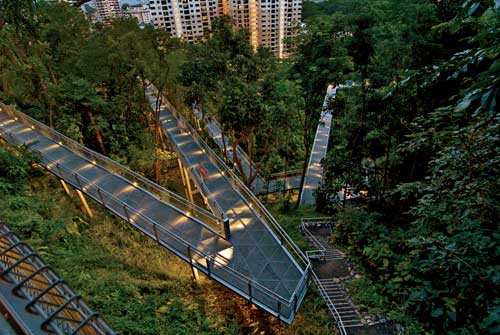 Singapore's Forest Walk